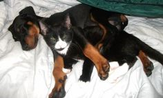 Love my two babies - Hunter & Sokkies