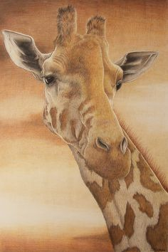 Giraffe by ~StephanieSekula on deviantART