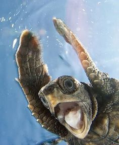 Ecstatic turtle