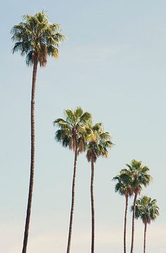 Los Angeles Photography, Palm Tree