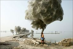 Pakistan: After the flood in the Sindh province the spiders has escaped into the trees.