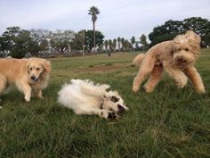 How much exercise does my dog need? The answer is found here! dogzenergy.com Pet Sitting, Dog Park, Dog Walking, Best Dogs, Zen, Exercise, Puppies, Blog, Animals