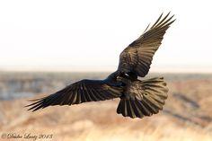 Raven wings by DeeOtter.deviantart.com on @DeviantArt