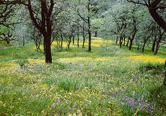 Wildflowers, expansive vistas, and challenge galore for any hiker, Henry W. Coe State Park has it all in early Spring. ♥♥♥♥♥