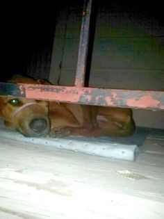 Neighbors Can Only Watch This Dog's Private Hell Pass it on Animal Cruelty Laws, Animal Rescue, Stories That Will Make You Cry, Animal Help, Animal Control, Animal Welfare, Animal Rights, Dog Cat, Puppies