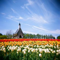 Holland- tulips are my favorite!