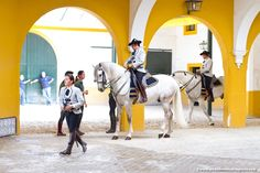 Horses have long traditions in Andalusia. The most peculiar of these traditions is Andalusian dancing horses, the pride and joy of Royal Andalusian School of Equestrian School in Jerez. #Jerez #Andalusia #RealEscueladeJerez #visitAndalusia #visitSpain #JerezDeLaFrontera #travelblog #travelphotography #equestrian #horses #wanderlust #exploretheworld