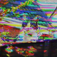 Just found this GIF in an old tutorial…thing that I made. Reposting because reasons. Now I sleep. Photoshop For Photographers, Photoshop Photography, Magic Cat, Internet Art, Glitch Art, Digital Portrait, Photo Effects, Photoshop Actions, Textile Art