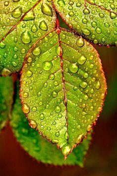 "~~""dew on leaves""~~"