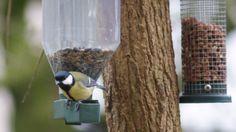 Eten voor de vogels is populair