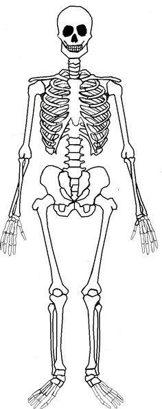 Labeled Skeletal System Diagram | Pinterest | Skeletons, Shoulder ...