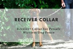Confused about PetSafe receiver collars for PetSafe wireless dog fences? Here's a complete guide to choosing the best additional receiver collars for your PetSafe wireless dog fence.