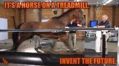 Four words why VT rules all: HORSE ON A TREADMILL.