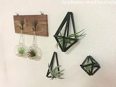 100均ストローを使ったヒンメリの作り方(3種類)をご紹介! Terrarium, Floating Shelves, Design, Home Decor, Wall Mounted Shelves, Interior Design, Home Interiors, Decoration Home