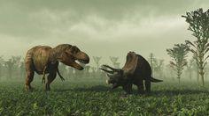 T Rex vs Tricératops