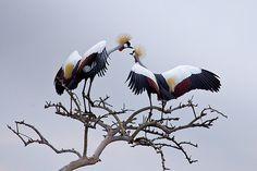 A loved-up pair in the Masai Mara, Kenya    John Foreman of Bournemouth