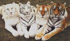 The four amigos! <3
