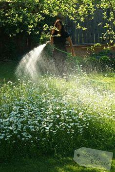 Wasser marsch! *Gieß-ABC* - Richtig Gießen Backyard Landscaping, Niagara Falls, Waterfall, Landscape, Garden, Nature, Outdoor, Water, Plants