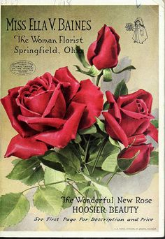 Rose - Miss Ella V. Baines, The Woman Florist, Springfield, Ohio : The Wonderful New Rose Hoosier Beauty, 1918 Vintage Labels, Vintage Ephemera, Vintage Cards, Vintage Postcards, Vintage Images, Garden Catalogs, Seed Catalogs, Images Noêl Vintages, Seed Art