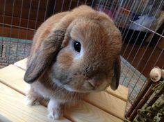 Bunny face, bunny bum - November 10, 2013 - More at today's post: http://dailybunny.org/2013/11/10/bunny-face-bunny-bum/ !