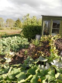 allotment plot + shed