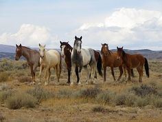Colorado to see horses in the wild