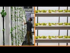 Vertical Farming: Horizontal Plane vs Vertical Plane Production - YouTube