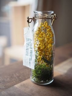 Dried flowers in a bottle Do you know you may maintain mimosa with out water. The yellow balls dry however stay ornamental. Hyacinth Flowers, Green Flowers, Diy Flowers, Flower Ideas, Deco Floral, Arte Floral, Mimosas, Ikebana, Diy Plante
