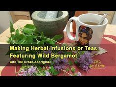 Making Herbal Infusions or Teas: Featuring Wild Bergamot w/ The Urban Ab. Aboriginal Food, Bergamot, Teas, The Balm, Herbalism, Urban, Ethnic Recipes, Herbal Medicine, Tees