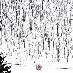 """l'ultima neve""  (Etna - 2015)"