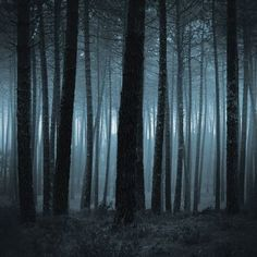 Sleepy Hollow - Dark Hollow 12x12 Scrapbook Papers by Ella & Viv - 5pcs