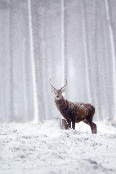Scottish Winter by John Betts