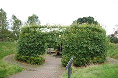 willow Willow Bush, Willow Tree, Living Fence, Garden Living, Hidden Garden, Wind Of Change, Outdoor Areas, Great Friends, Permaculture