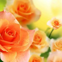 Wallpaper Most Beautiful Orange Rose In The World Hd Images With Flower Colourful High Quality For Pc Full Most Beautiful Flower Wallpaper World Colourful