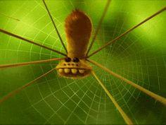 minuscule spider