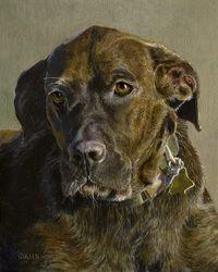 Dog Portrait Gallery -  Stephen J Cullen / Art & Photography