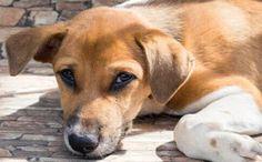 O GRITO DO BICHO 3: Protetora é multada por prefeitura e reabre polêmi... Terrier, Cute Animals, Dogs, Modern Bathroom, Room Ideas, Dining Room, Frame, Town Hall, Dog