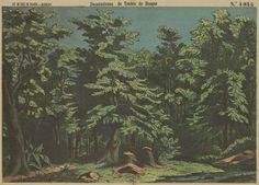 Decoraciones de Teatro de bosque ; Bastidores de bosque