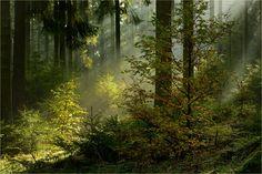Photograph There will be light by Ingrid Lamour on 500px