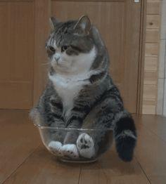 "gwenbeauregard: """"I'll just sit here until she brings my din din … "" """