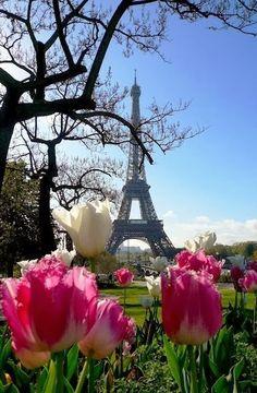 Eiffel Tower Flowers Garden Love