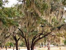 Image result for South Carolina Native Plants