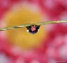 Macro flower - amazing