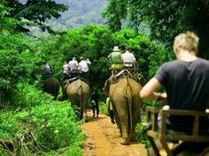 Elephant rides in Thailand. What an amazing experience! #travel #adventurehoney