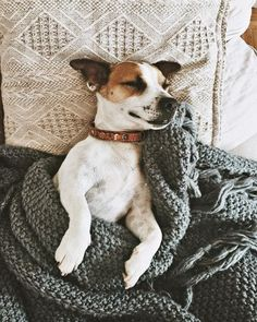 This is legit my dogespecially when I first get out of bed in the morning. She always has to take my spot. Animals And Pets, Baby Animals, Funny Animals, Cute Animals, Dog Pictures, Animal Pictures, Pet Dogs, Dog Cat, Doggies