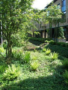 Accordia, Cambridge. Landscape architecture by Bath-based landscape architects Grant Associates.