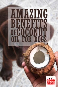 Coconut oil for dogs? You bet! Coconut oil has many healthy benefits for your puppy. Here's 17 ways how to use coconut oil for dogs to benefit their health and grooming. #dogs #coconutoil #dogcare