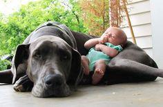 A amizade perfeita entre bebês e cachorros