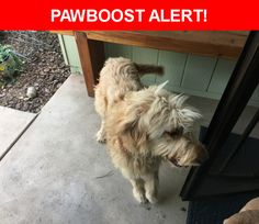 Is this your lost pet? Found in Tucson, AZ 85715. Please spread the word so we can find the owner!    Near E. Waverly Street