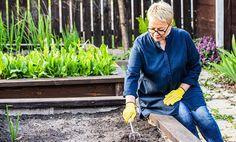 Ako na vyvýšené záhony? Tu sú tipy na vhodné materiály, umiestnenie i pestovanie plodín v nich Gardening For Beginners, Raised Beds, Plants, David, Gardening For Dummies, Flower Beds, Plant, Planets
